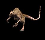 大老鼠.png